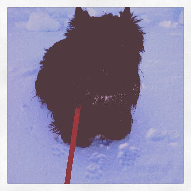 Might as well take Audrey for the walk (no one loves the snow more than my puppy).