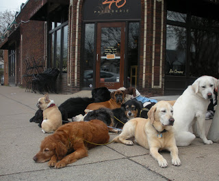 I love this candid shot by hismomandme.blogspot! Canines waiting outside while parents indulge inside.